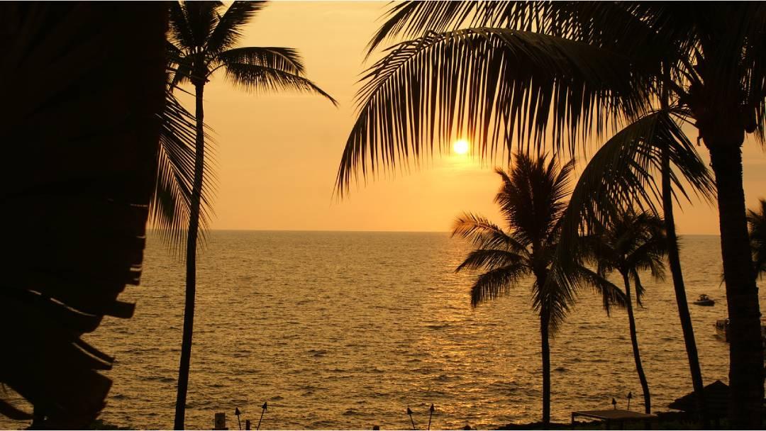 beach and palms Hawaii
