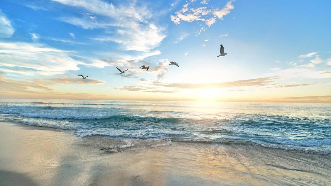 birds flying on Fiji near the ocean