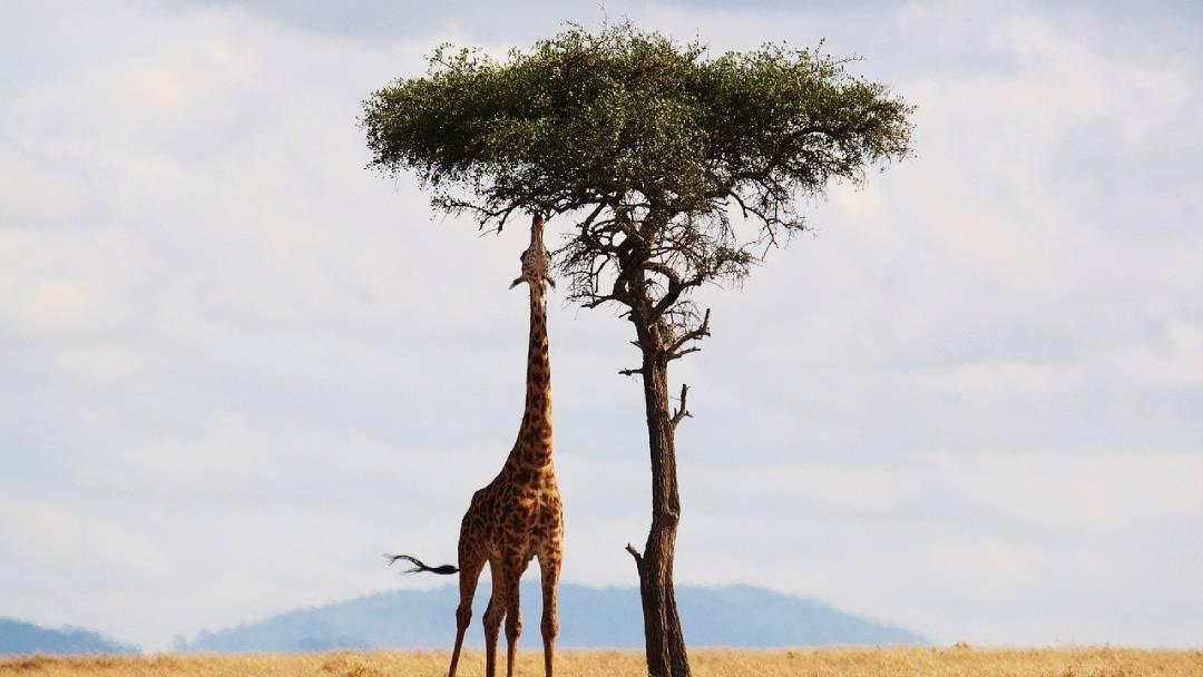 giraffe tour Nairobi
